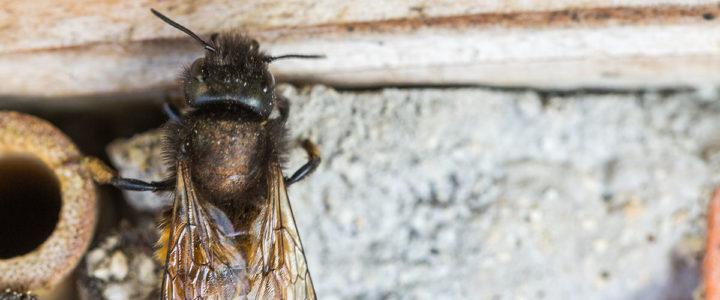Insekten Bienenhotel