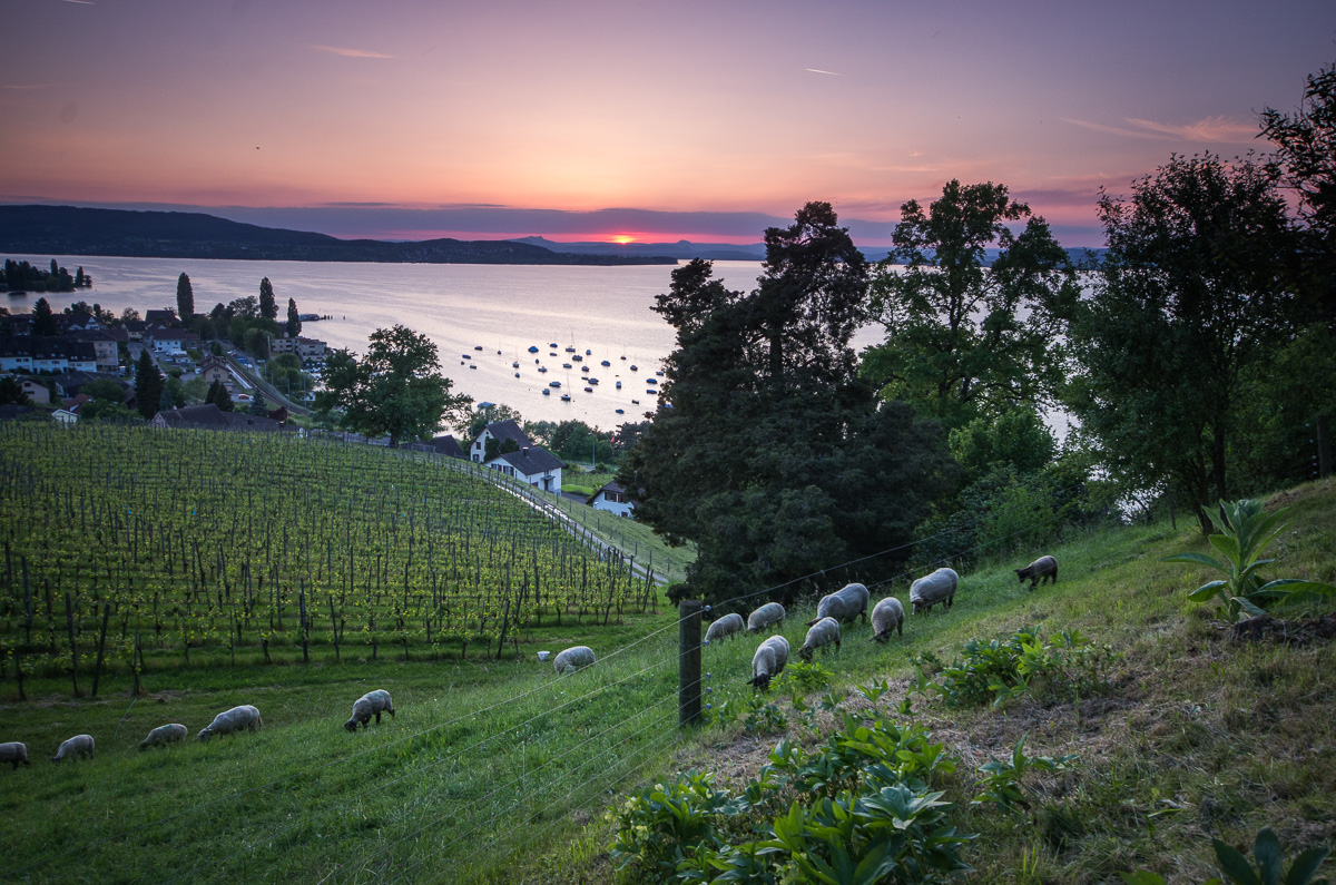 Arenenberg Bodensee