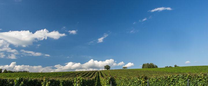 """<span class=""""entry-title-primary"""">Wein vom Bodensee</span> <span class=""""entry-subtitle"""">Eine Entdeckungsreise für Kenner</span>"""